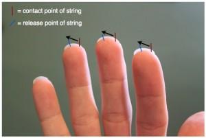 fingersnails back 300x201 نگرشی بر فرم ناخن ها و نقاط تماس در تولید صدا tone production